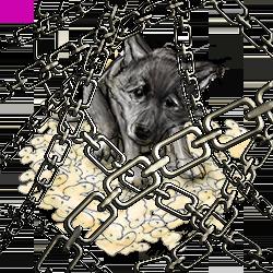 Puppy, behind Chains