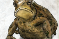 Hans' Toad (~2012, the Underworld) [Enemies Endure]
